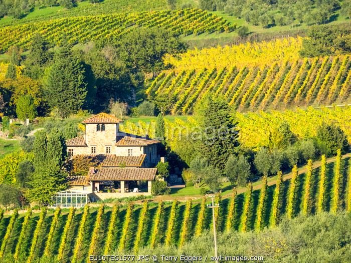 Italy, Tuscany. Autumn vineyards near the town of Panzano