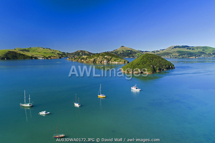 Goat Island, Quarantine Island, Otago Peninsula and Otago Harbor, Port Chalmers, Dunedin, Otago, South Island, New Zealand