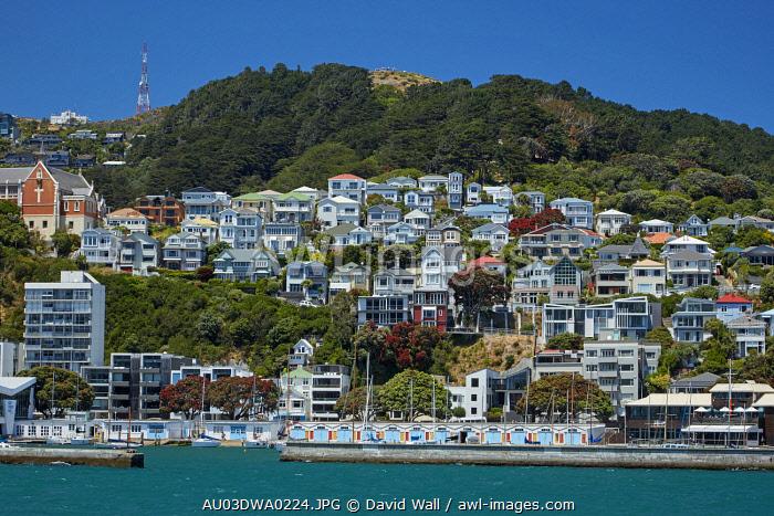 Boatsheds, Clyde Quay Marina and historic villas, Oriental Bay, Wellington, North Island, New Zealand