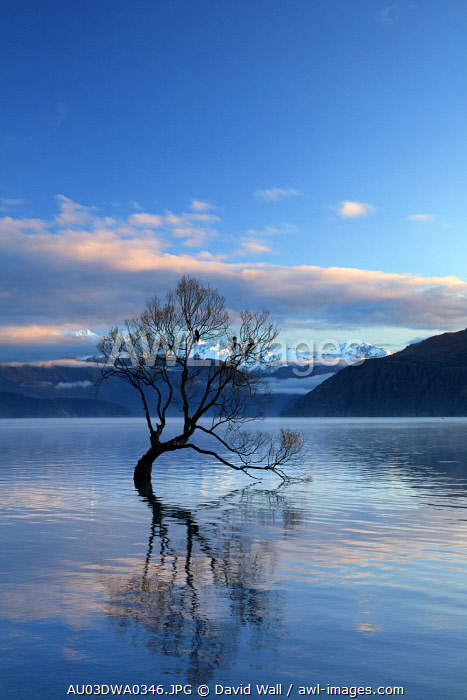 That Wanaka Tree reflected in Lake Wanaka, Otago, South Island, New Zealand