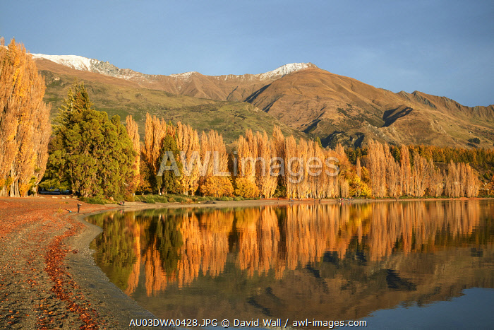 Poplar Trees and Lake Wanaka, Otago, South Island, New Zealand
