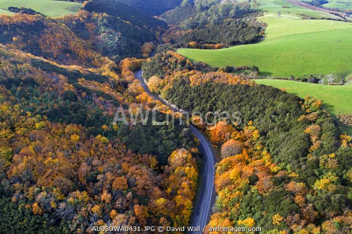 Autumn color, Manuka Gorge, Otago, South Island, New Zealand