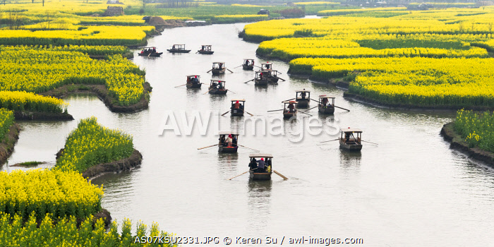 awl-images.com - China / Rowing boat on river through Thousand-Islet canola flower fields, Xinghua, Jiangsu Province, China