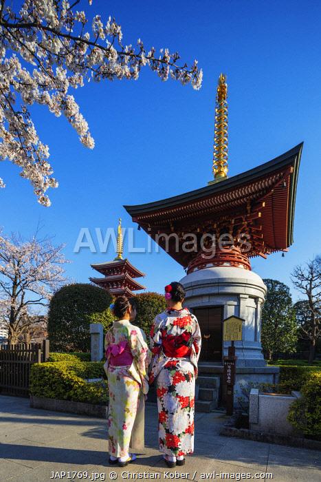 Asia, Japan, Tokyo, women in kimono, spring cherry blossoms, Asakusa, Sensoji temple, girls in kimono
