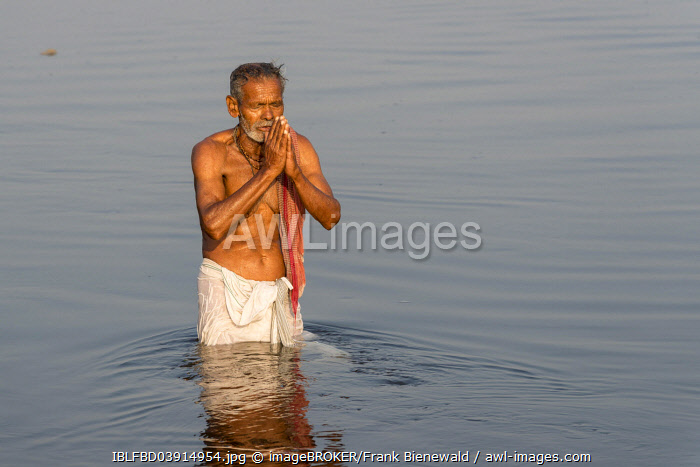 Pilgrim taking a bath praying in the holy Yamuna river, Vrindavan, Uttar Pradesh, India, Asia
