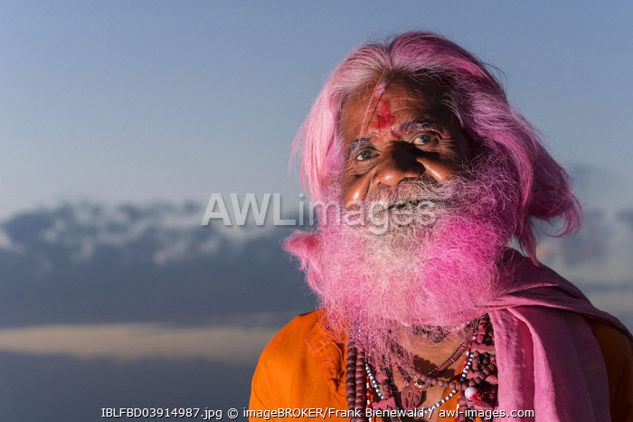 Portrait of an old man with a pink beard at the Holi festival, Vrindavan, Uttar Pradesh, India, Asia