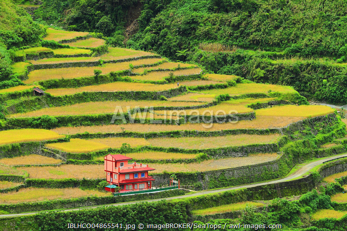 Rice terraces of Banaue, Luzon, Philippines, Asia