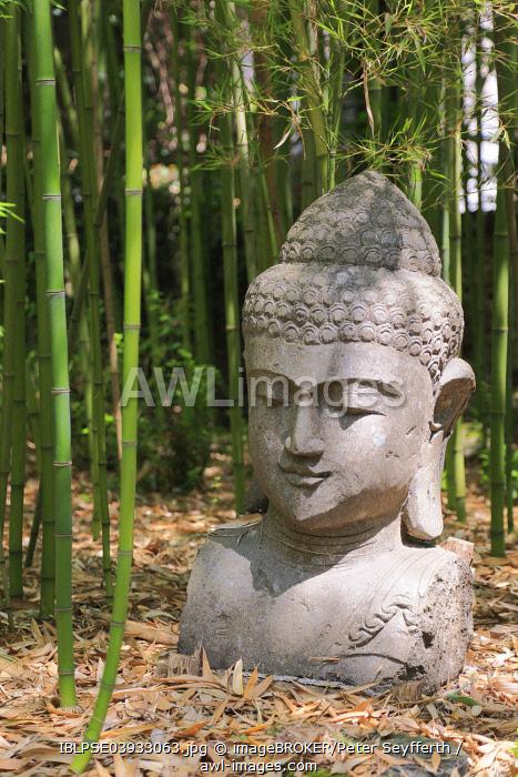 Buddha head, Les Bambous du Mandarin bamboo forest, Departement Var, Provence-Alpes-Cote d'Azur, France, Europe