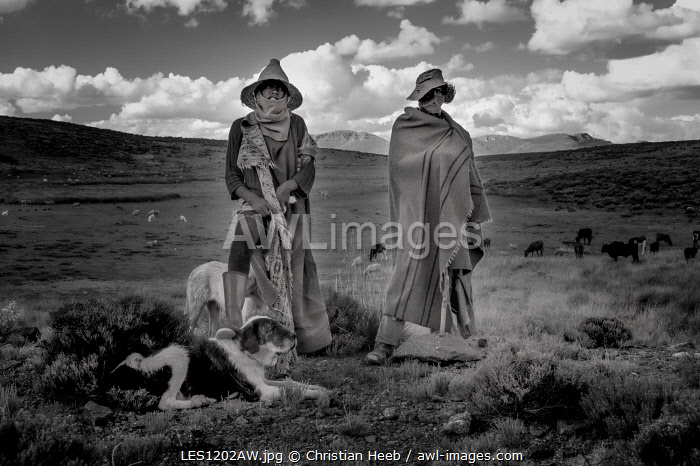 Africa, Southern Africa, Maseru District, Lesotho, Semonkong, sheep herder
