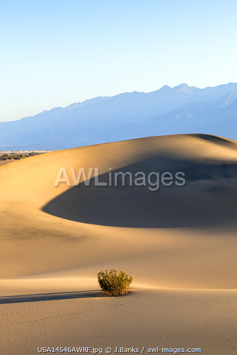 awl-images.com - USA / Mesquite Flat Sand Dunes, Death Valley National park, California, USA