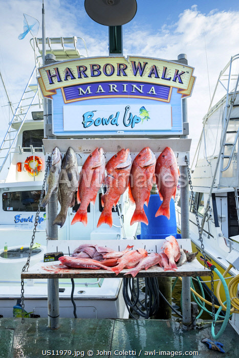 USA, Florida, Destin, Destin Harbor Boardwalk, Red Snapper Fish, Fishing Tours, Panhandle, Emerald Coast, Gulf Of Mexico