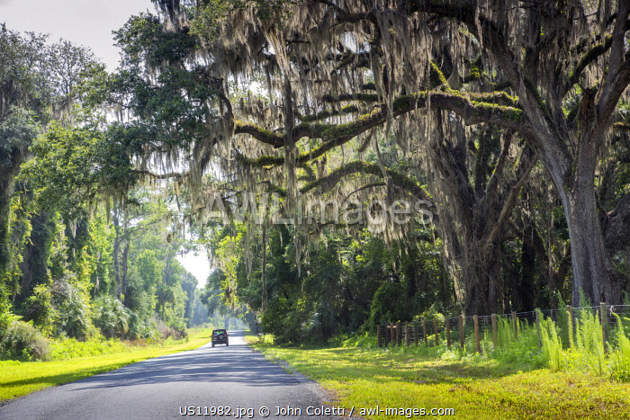 USA, Florida, Micanopy, Alachua County, Country Road, Oak Trees, Spanish Moss
