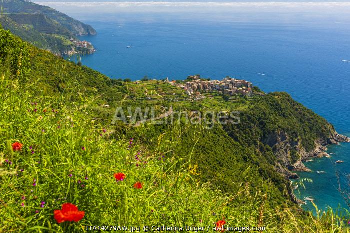 Europe, Italy, Liguria, Cinque Terre. Overlooking the coast of the Cinque Terre with Corniglia and Manarola.