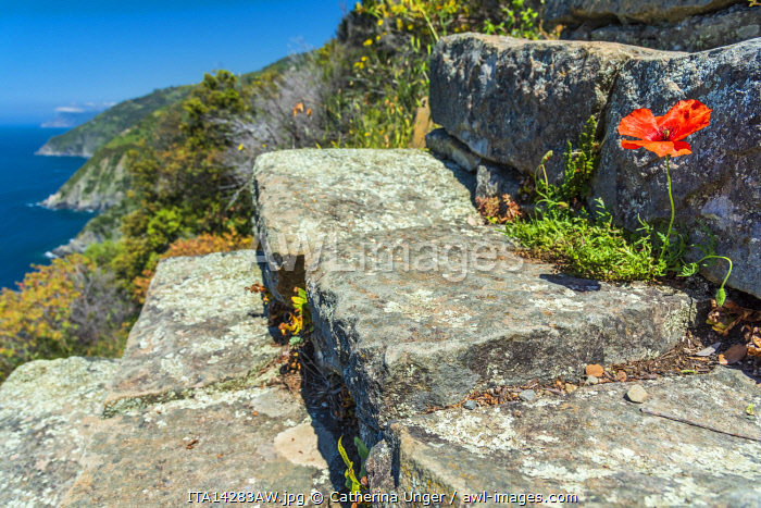 Europe, Italy, Liguria, Cinque Terre. The famous stairway of Monesteroli in the Cinque Terre National Park