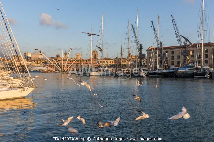 europe, Italy,Liguria. Genoa, the old port with the Bigo lift of Renzo Piano