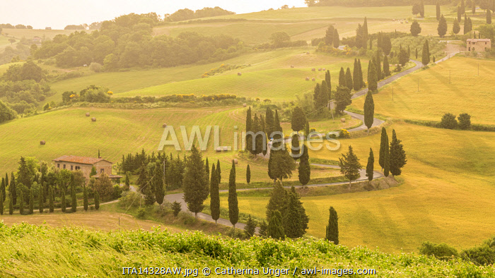 Europe, Italy, Tuscany. The famous cypresses of Monticchiello