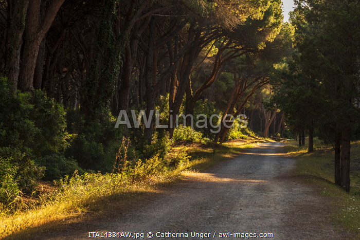 Europe, Italy, Tuscany. Sunrise in the Nature reserve of Duna Feniglia on the Monte Argentario.