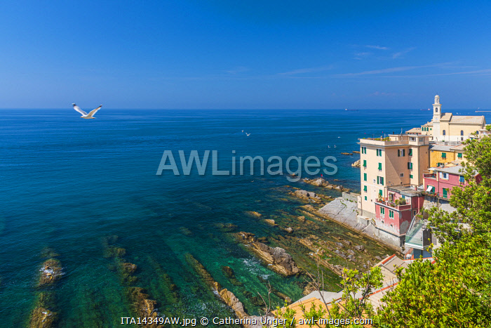 Europe, Italy, Liguria. View towards Boccadasse and its church.