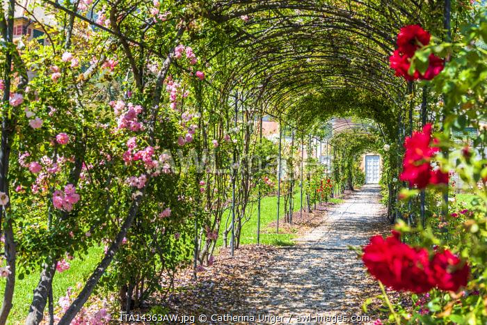 Europe, Italy, Liguria. Genoa, Nervi. Inside the rose garden of the Nervi villa.