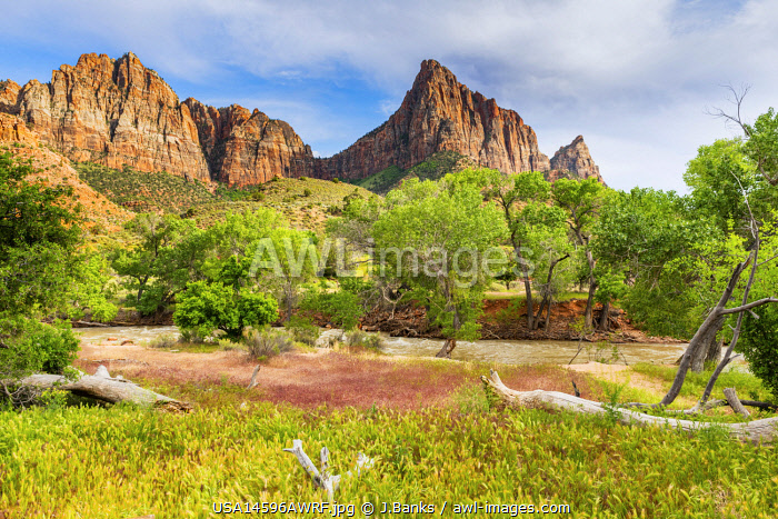 awl-images.com - USA / View of the Watchman over the Virgin river Zion National Park, Utah, USA