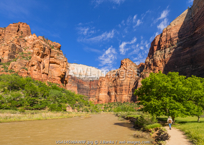 awl-images.com - USA / Man enjoying the view from Angels landing Zion National Park, Utah, USA, North Americadscape,