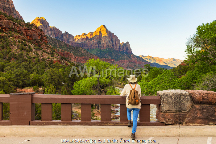 awl-images.com - USA / Enjoying the view down the Virigin river to the Watchman Zion National Park, Utah, USA
