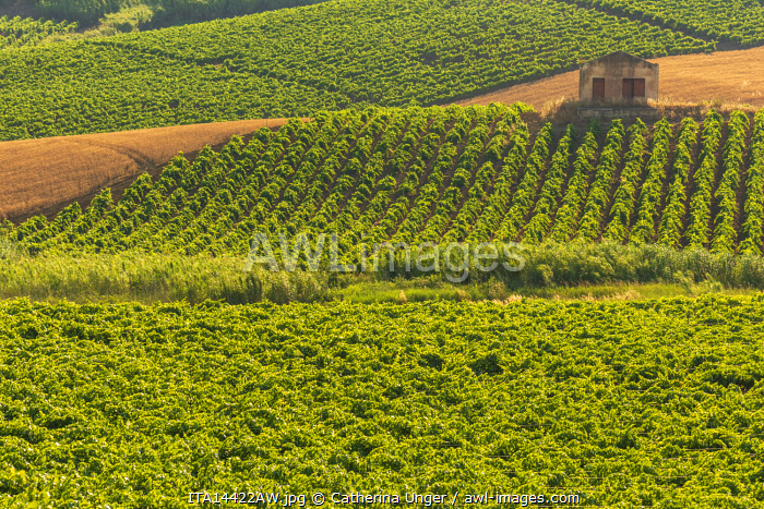 awl-images.com - Italy / Europe, Italy, Sicily. A landscape with vineyards in Northern Sicily.