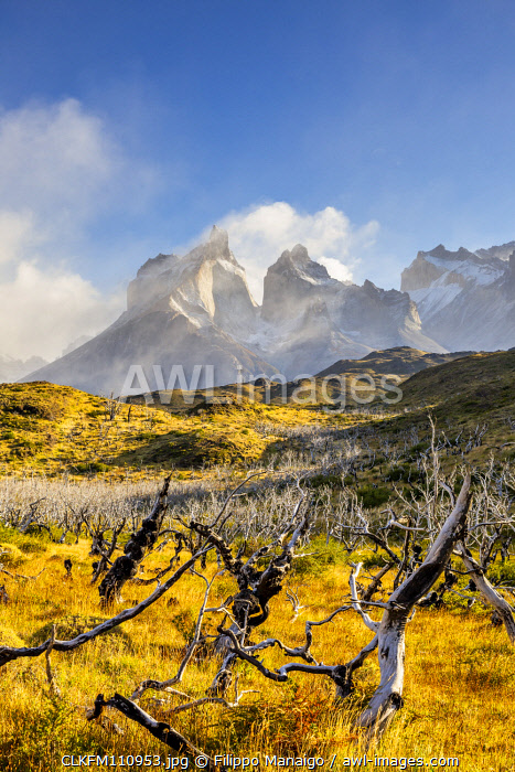 awl-images.com - Chile / Chile, Patagonia, Magallanes and the Chilean region of Antarctica, Ultima Esperanza province, Torres del Paine National Park,Paine Horns with burned trees in the foreground