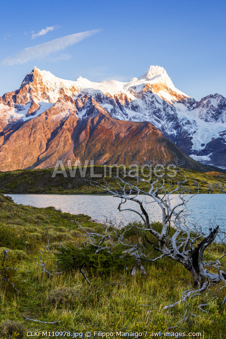 awl-images.com - Chile / Chile, Patagonia, Magallanes and the Chilean region of Antarctica, Ultima Esperanza provinces, Torres del Paine National Park, Cerro Paine Grande with burned trees in the foreground at dawn