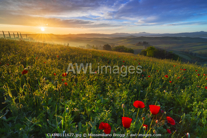 awl-images.com - Italy / Sunrise at Podere Belvedere, San Quirico d'Orcia, Siena, Tuscany, Italy, Southern Europe