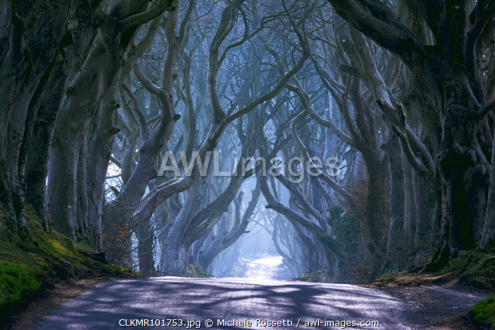 UK, Northern Ireland, County Antrim, Ballymoney, The Dark Hedges