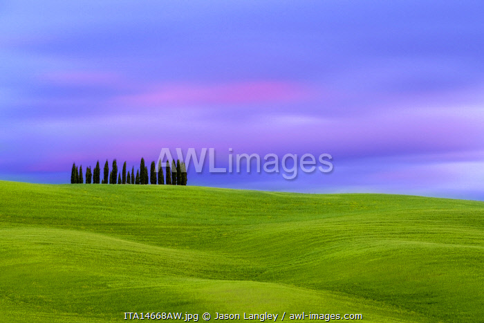 Tuscan landscape, rolling hills with wheat fields and cypress trees at sunset, San Quirico d'Orcia, Val d'Orcia, Tuscany, Italy, Europe.