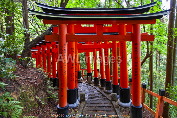 awl-images.com - Japan / Multiple torri (Senbontorii) gates with Kanji calligraphy forming the route through the Shinto Fushimi Inari Taisha Shrine, Fukakusa, Shimoseya, Kyoto Fu, Japan.