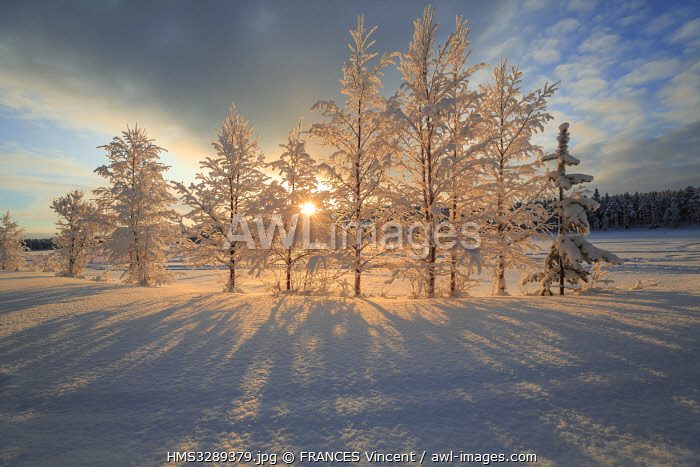 awl-images.com - Sweden / Sweden, Lapland, region listed as World Heritage by UNESCO, Norrbotten County, Beech, birch and fir snow-covered