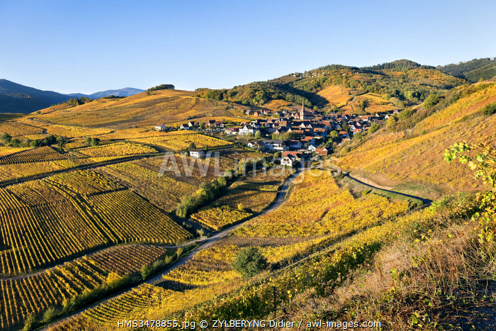 awl-images.com - France / France, Haut Rhin, Niedermorschwihr, vineyards in autumn.