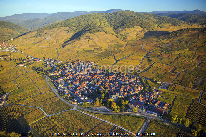 awl-images.com - France / France, Haut Rhin, Alsace wine road, Kientzheim, fortified village, vineyards (aerial view)