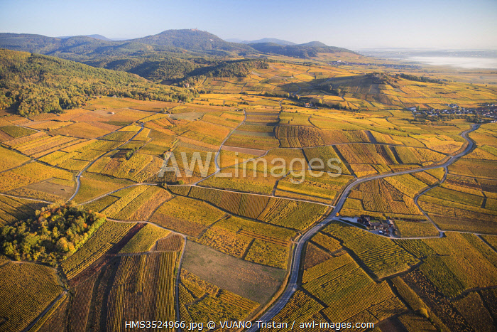 awl-images.com - France / France, Haut Rhin, Alsace wine road, between Bergheim and Ribeauville, vineyards (aerial view)