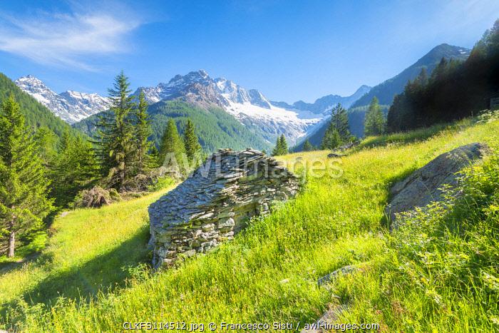 Pastures of Ca Novi, Valmalenco, Valtellina, province of Sondrio, Lombardy, Italian alps, Italy