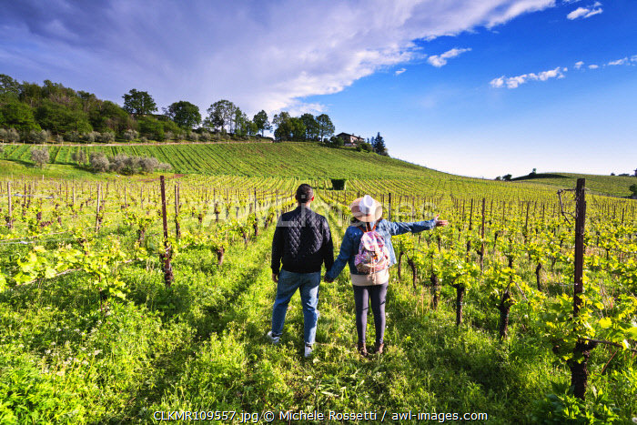 Couple among the vineyards of Franciacorta, Brescia province, Lombardy district, Italy, Europe (MR)