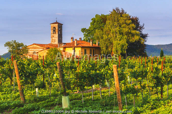 Church immersed in the Franciacorta vineyards, Brescia province, Lombardy district, Italy.