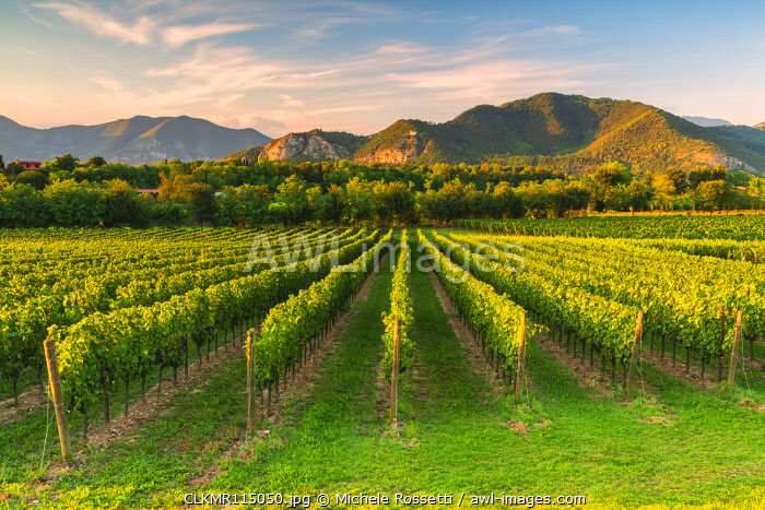 Sunset in Franciacorta in summer season, Brescia province, Lombardy district, Italy