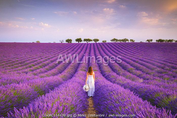 A woman in white dress in the fields of lavender near Valensole, Alpes-de-Haute-Provence, Provence-Alpes-Côte d'Azur, France. (MR)