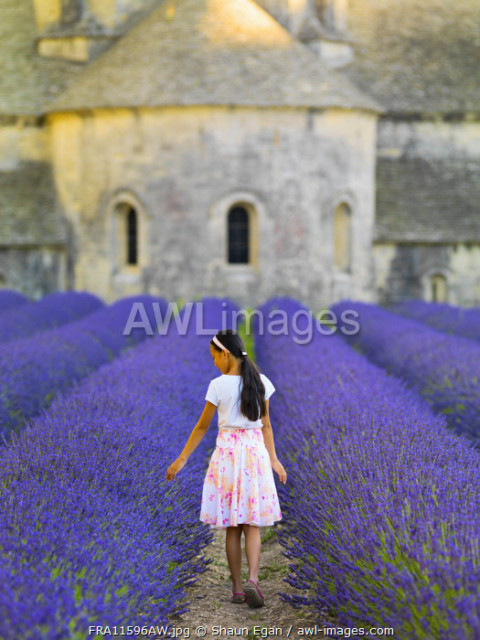 France, Provence, Vaucluse, Gordes, Senanque abbey; girl walking through lavender (MR)