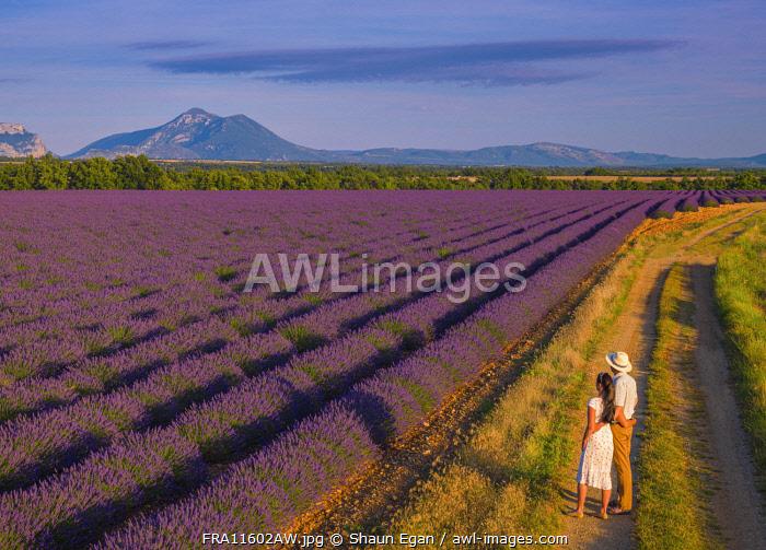 France, Provence Alps Cote d'Azur, Haute Provence, Valensole Plateau, couple standing by lavender Field (MR)