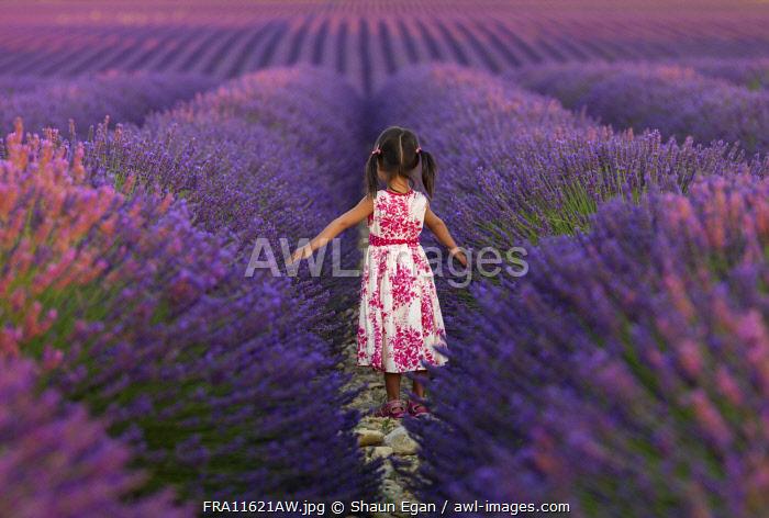 France, Provence Alps Cote d'Azur, Haute Provence, Valensole Plateau, girl walking through lavender Field (MR)