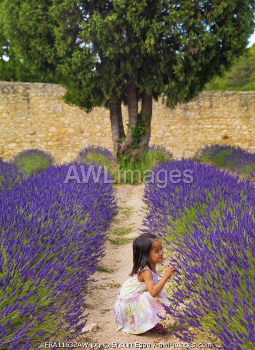 France, Provence, Vaucluse, Gordes, Senanque abbey, girl touching lavender (MR)