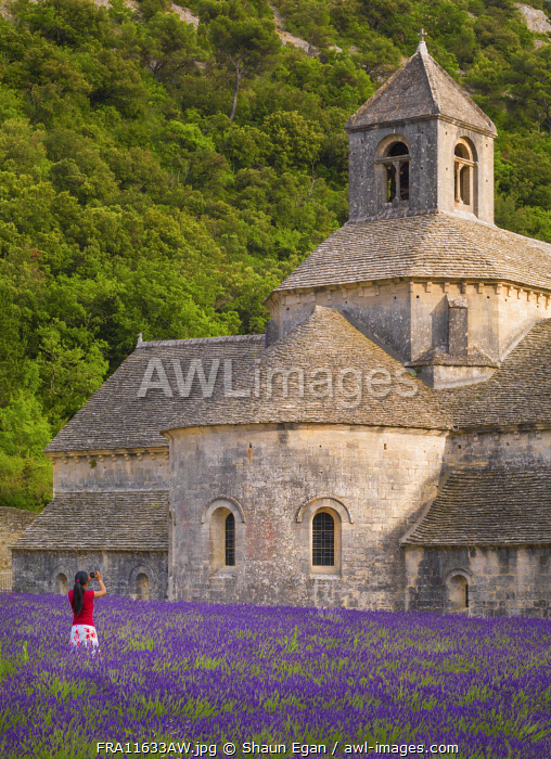 France, Provence, Vaucluse, Gordes, Senanque abbey; Woman photographing monastry (MR)