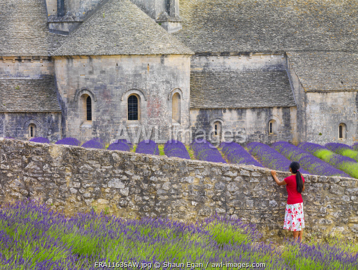 France, Provence, Vaucluse, Gordes, Senanque abbey, woman looking at monastry ( MR)