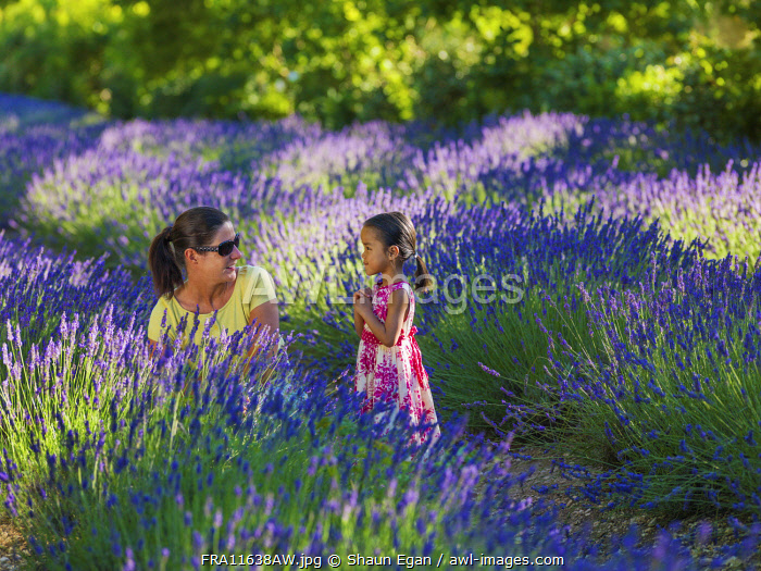France, Provence, Vaucluse, Gordes, Senanque abbey, woman and girl looking at lavender (MR)