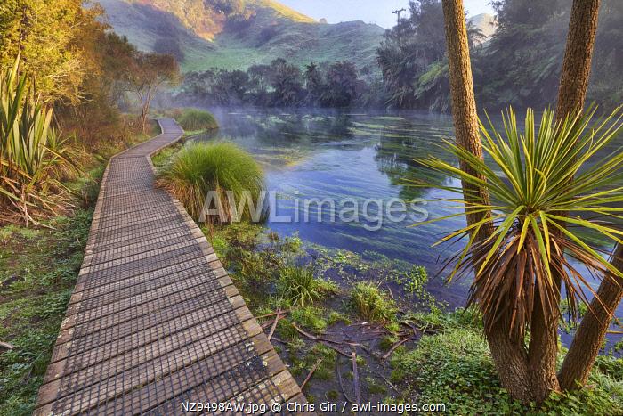 Blue Springs Te Waihou Walkway, Waikato, New Zealand